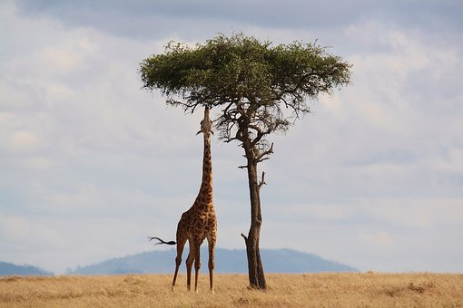 Must-do Activities In Africa